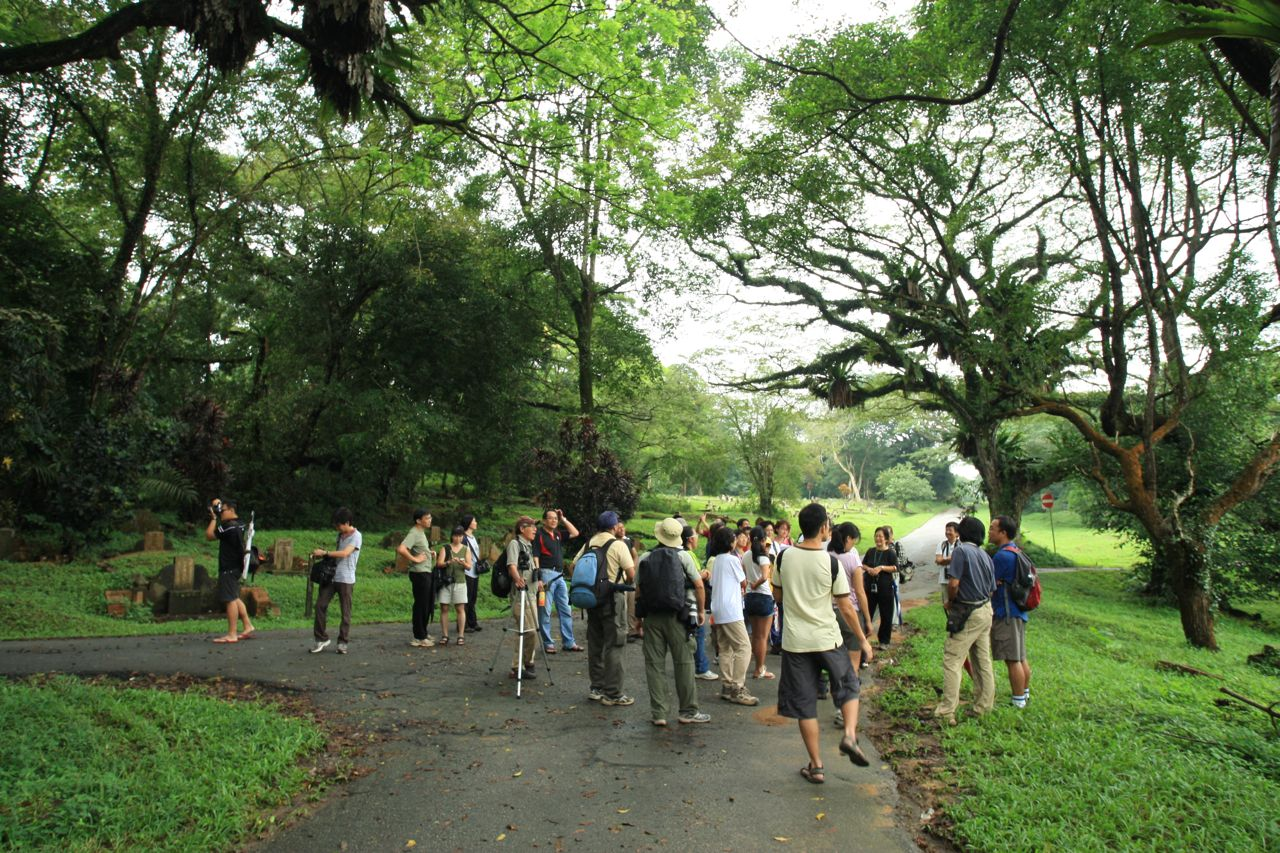Nature Society (Singapore) Public Walk @ Bukit Brown 24th Dec 2011