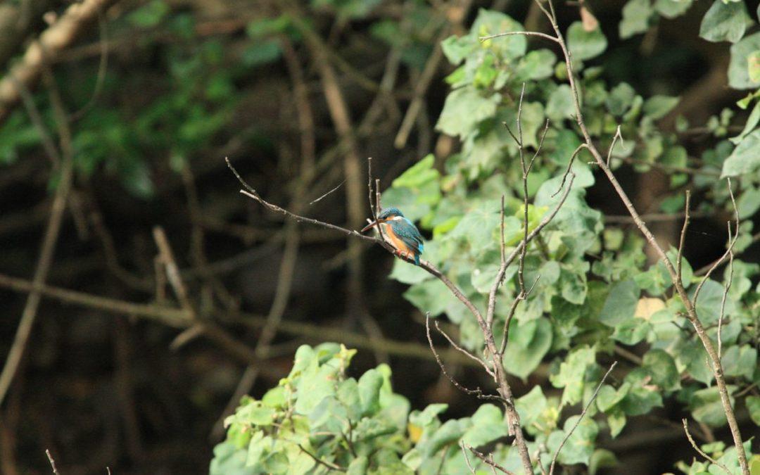 Birding Photography Adventure @ Berlayer Creek