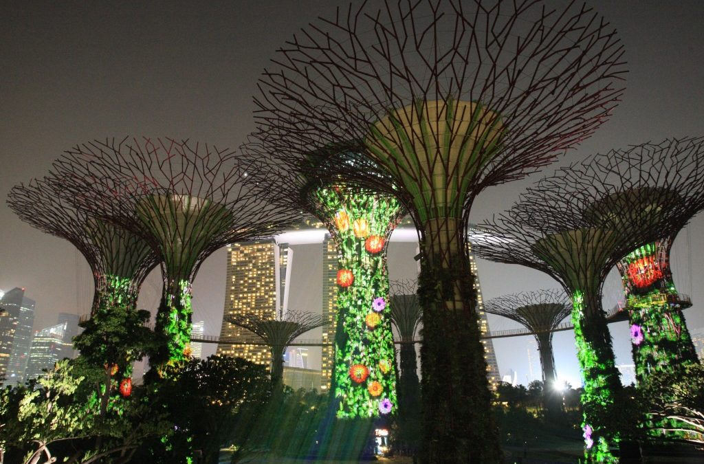 Mystical SuperTrees at Gardens By The Bay!
