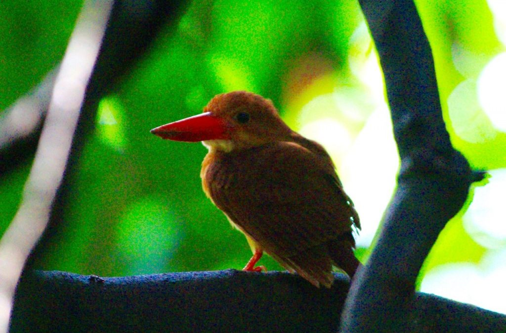 A Bird and Landscape Photography Exploration at Bidadari
